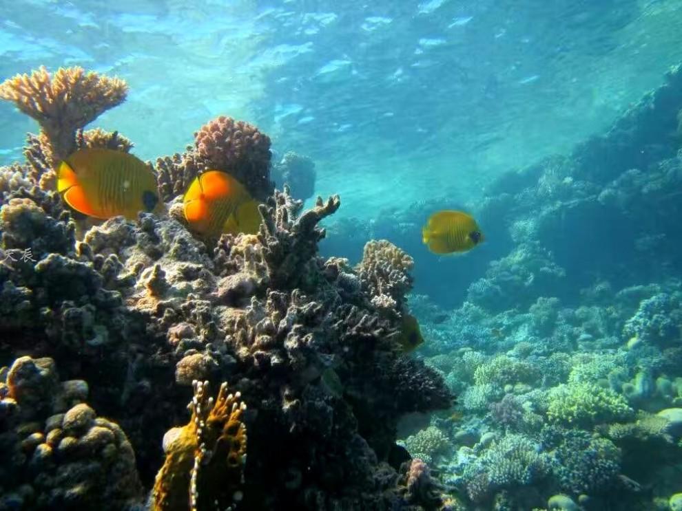埃及红海4