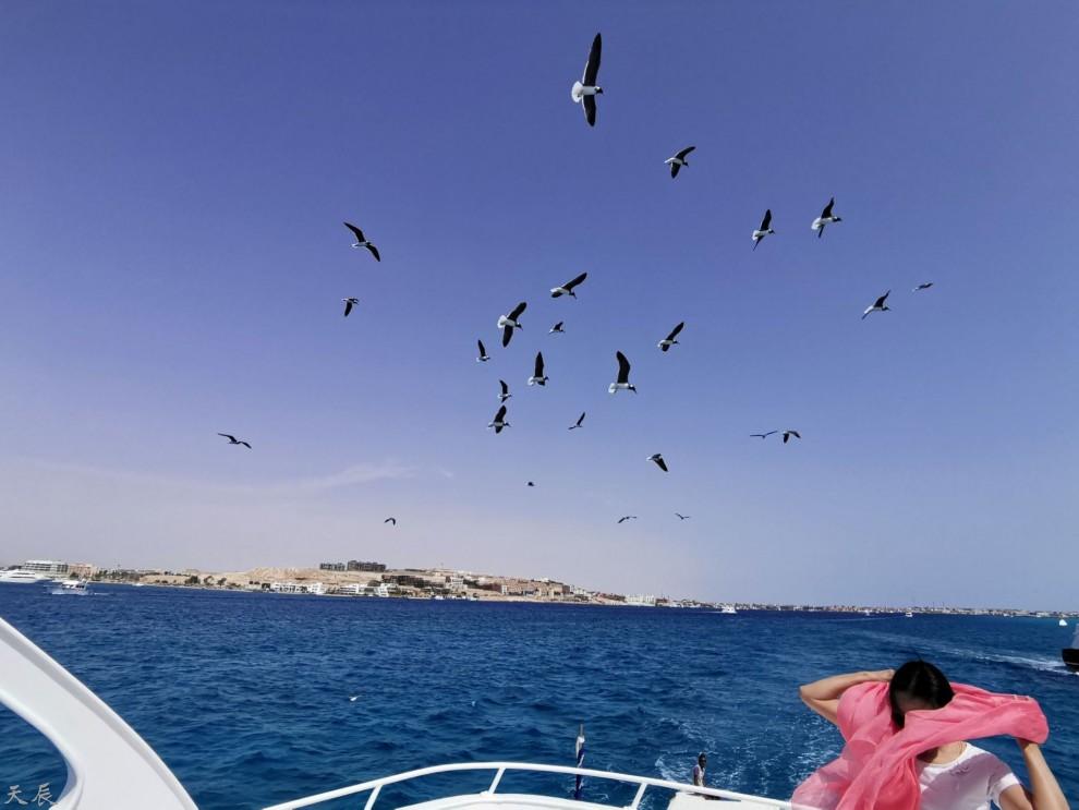 埃及红海8