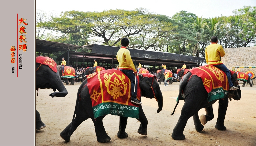 大象表演之二【泰国游·景点篇】