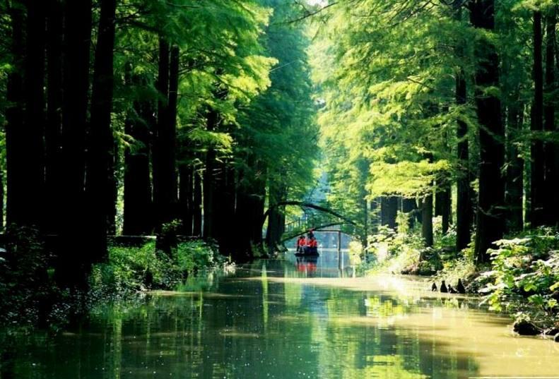 李中水上森林